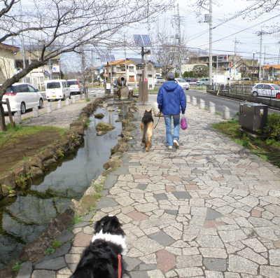 yakurobi4.jpg